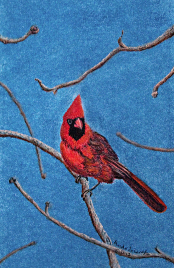 Red Cardinal Pastel Painting