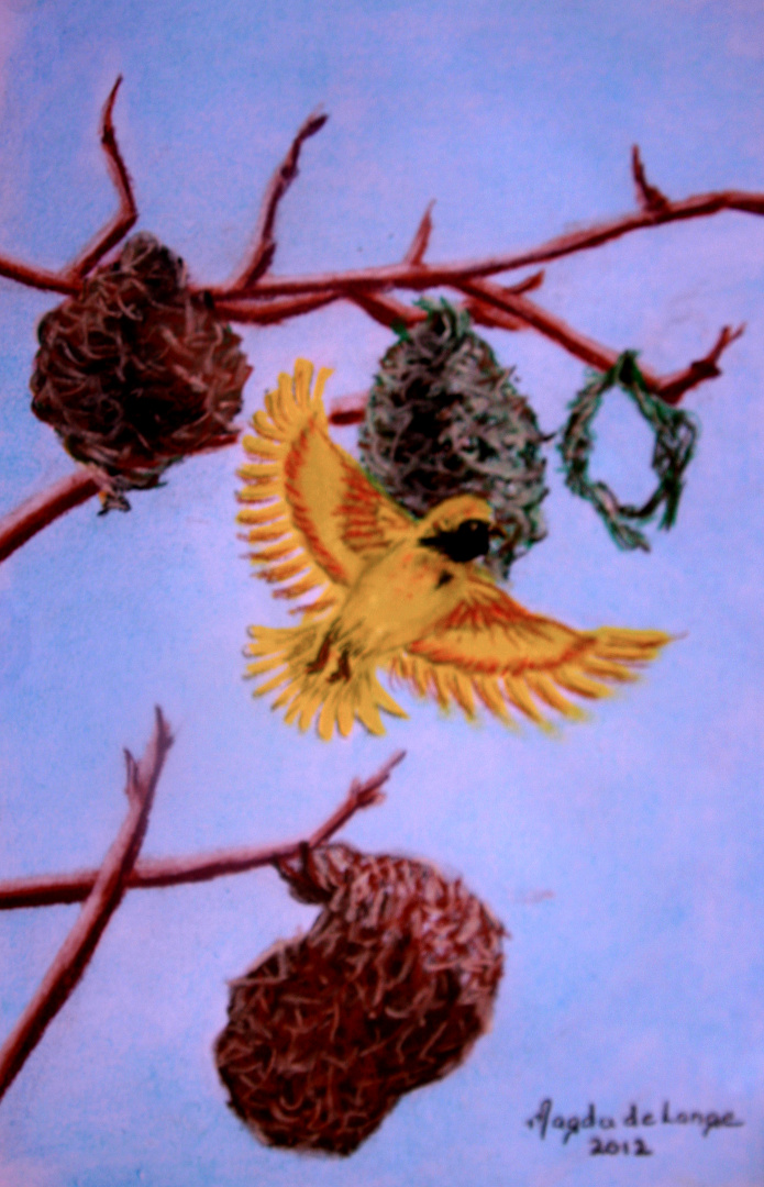 Southern Masked Weaver Pastel Painting